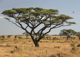 Africká krajinka