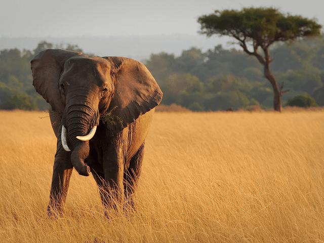 Senegalská fauna